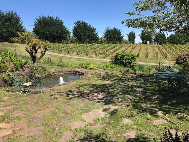 Vista Grande Vineyard Scenic Suite