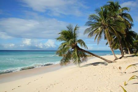 Dive paradise in Maldives