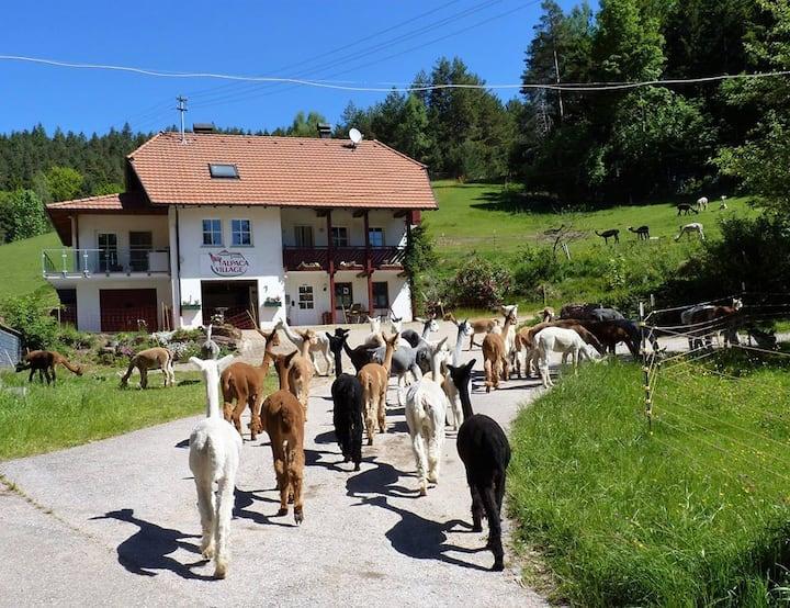 Alpaca-Village