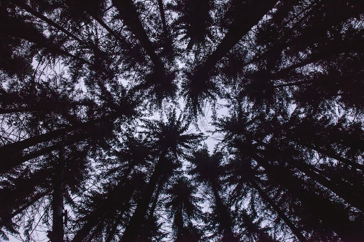 A view up from the forest floor.