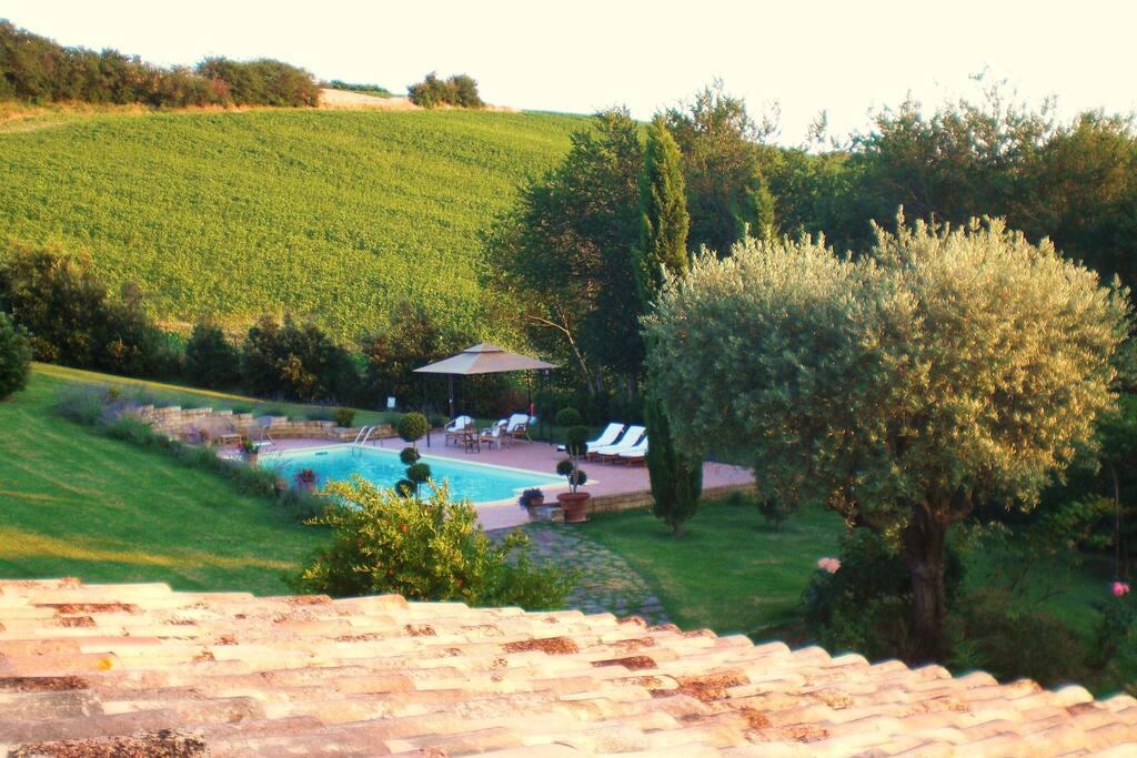 La piscina con il campo di girasoli