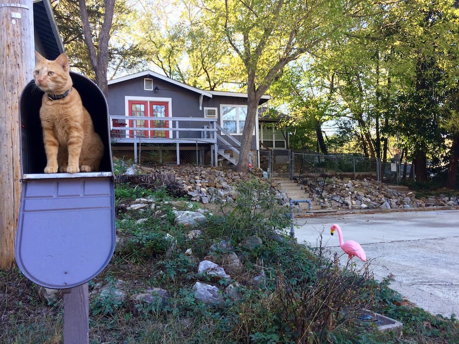 The pink flamingo guides you to the cottage's free off street parking area while TomTom, the neighborhood community cat and four-legged greeting committee, awaits your arrival. If you're not a cat person, don't worry -- he's not allowed in the cottage.