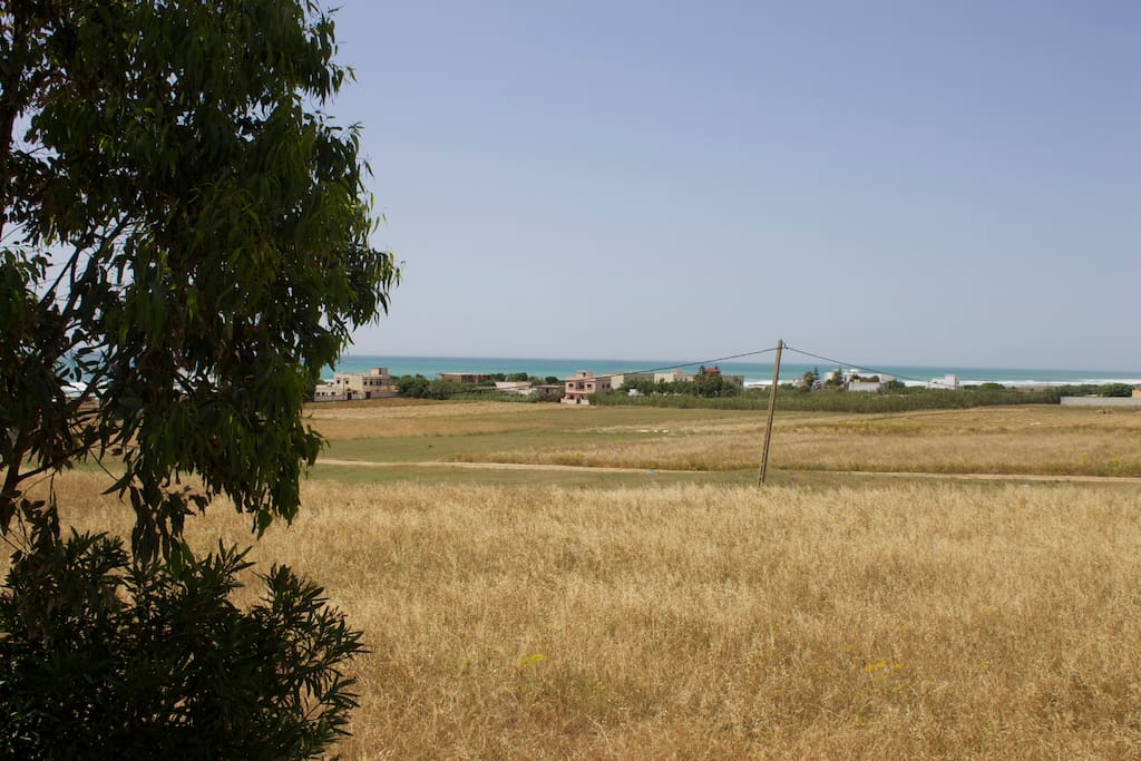 wheat fields behind the house
