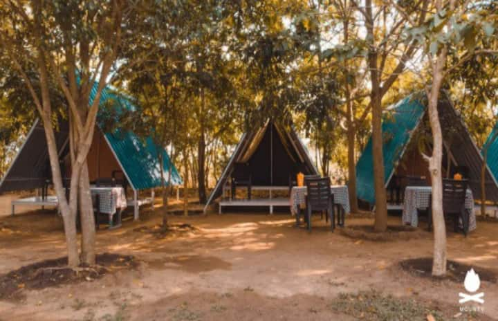 Tents Panther Jungle Stay