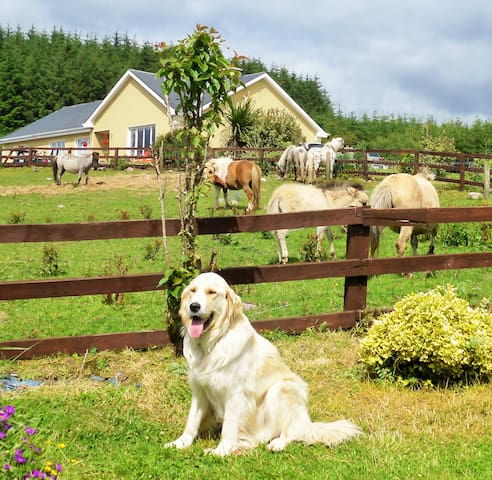 Farm House Bed & Breakfast  between Tulla & Ennis