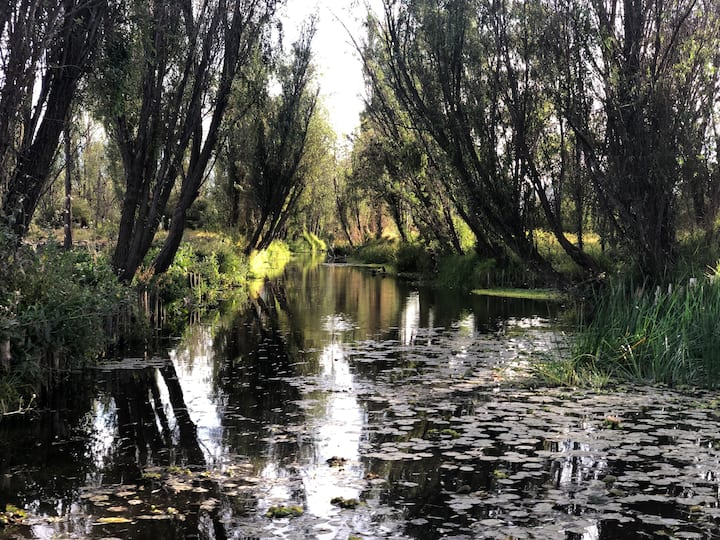 """THIS IS NOT TOURISTIC CANAL """"XOCHIMILCO"""""""