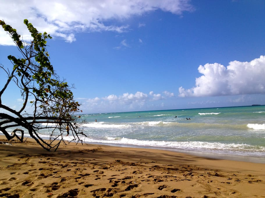 Looking north towards Punta Bonita. You can walk for miles on the beach.