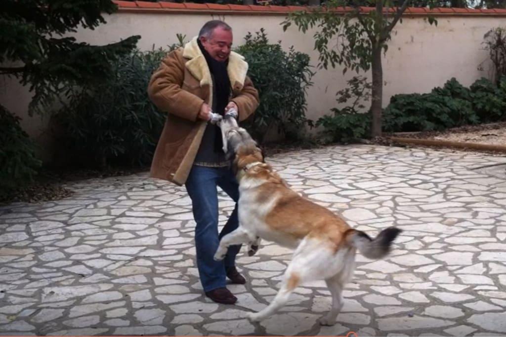 Voici Harold, mon chien. Très affectueux et joueur pour ceux qui aiment les animaux. Il ne vous embêtera pas.