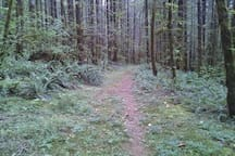 Trails off property where Sasquatch and other natives roam freely.
