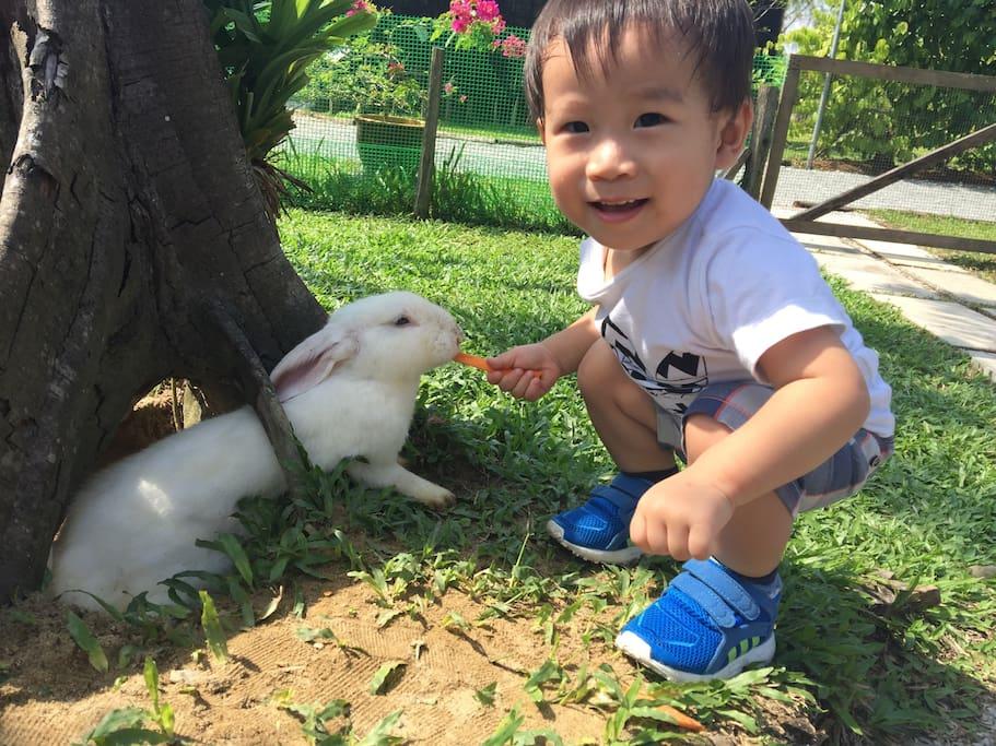屋子的小主人_超喜欢小动物