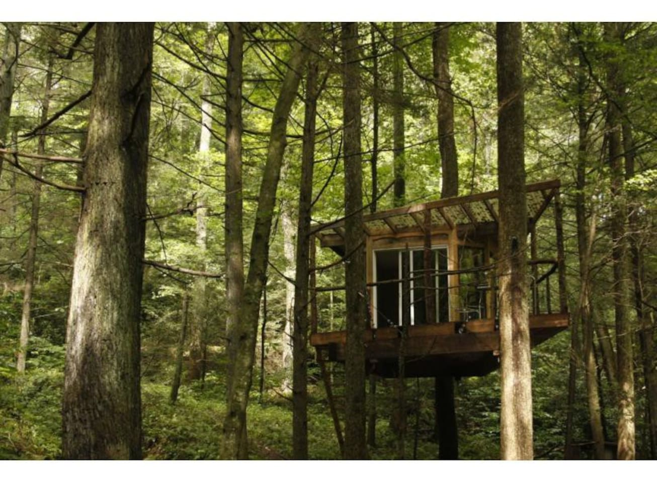 flying squirrel treehouse in Kentucky