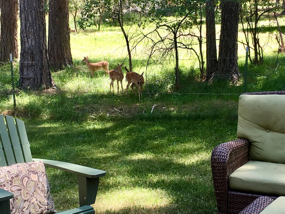Triplet fawns passing through for an afternoon snack.