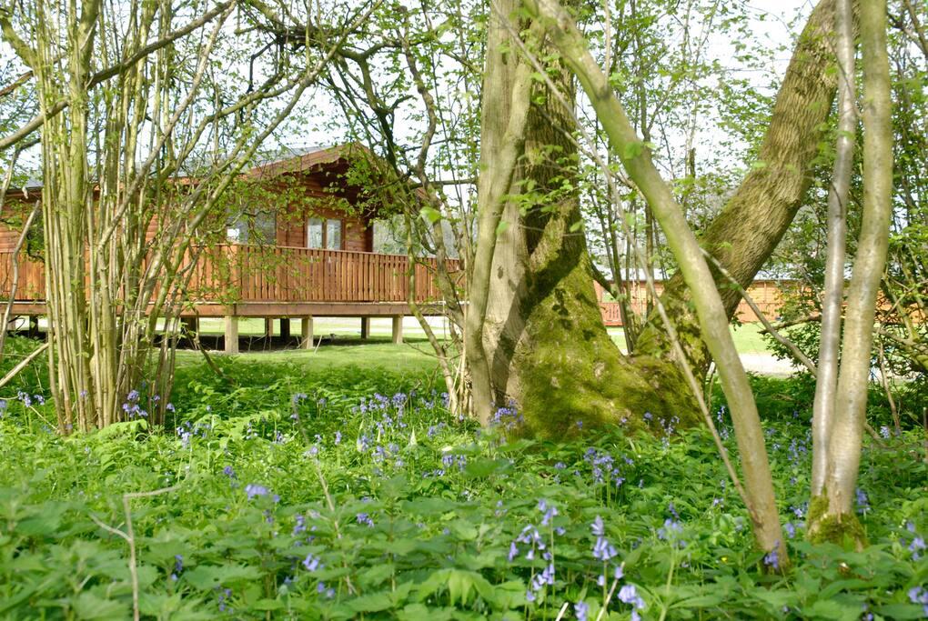bluebell wood setting