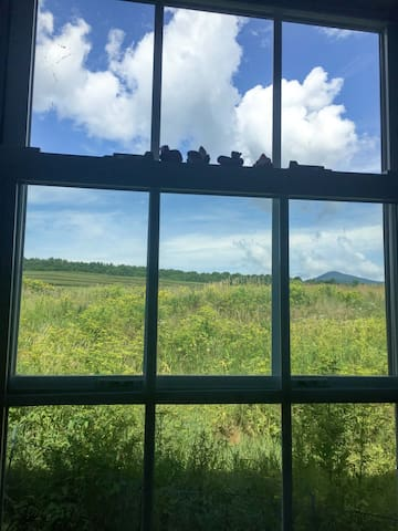 Beautiful view of Pinnacle Mountain in Canada from the kitchen window.