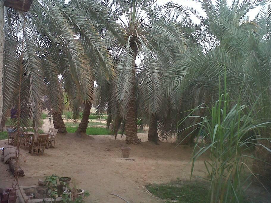 Fahmi's Garden
