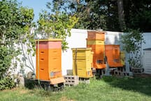 View the apiary from your bedroom window and add some honey to a cup of tea.