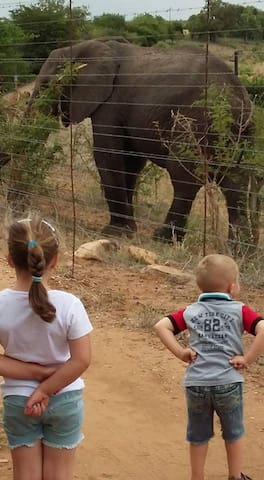 Going for a walk along the fence. On the other side of the fence is an Elephant on the Kruger Park Side. Any of the Big 5 can be viewed, up close