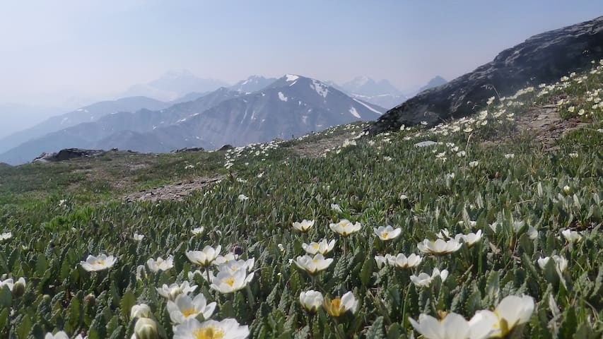 Wildflowers at the summit of Whistlers Mountain