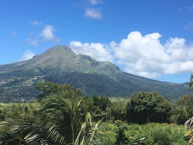 Panorama... Montagne Pelée, Forêt,Mer - Bleu