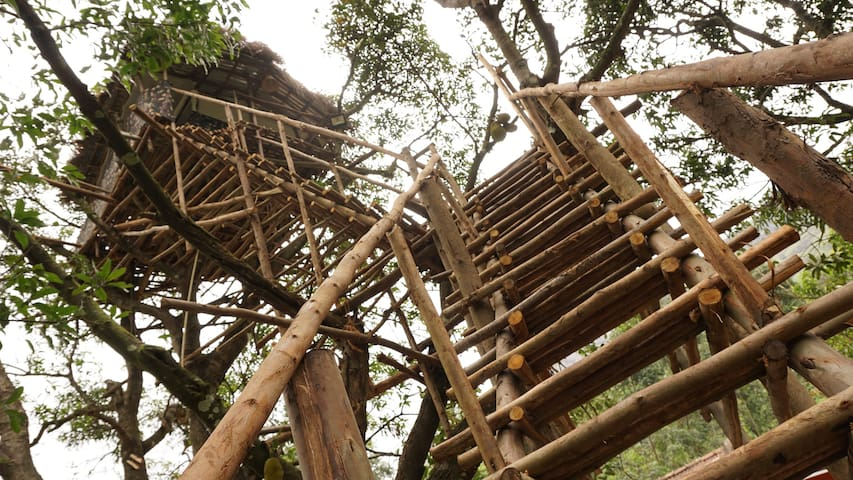 Real tree house experience - Munnar