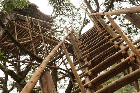 Real tree house experience - Munnar - Domek na drzewie