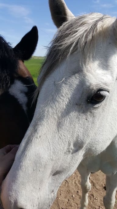 Halley's Comet & Cheyannie our horses and yes! they are super friendly but they still do spook easily so move slow and keep children and dogs (unfamiliar) close to you and watch your toes!