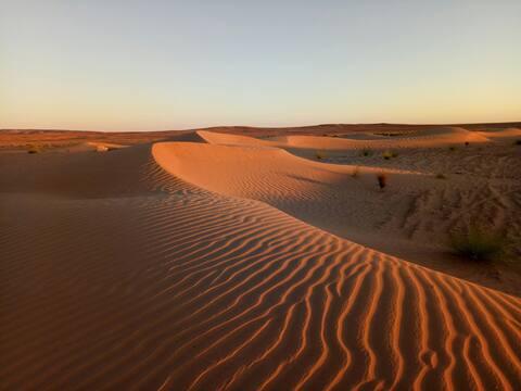 Camp and Camel trek sahara peace