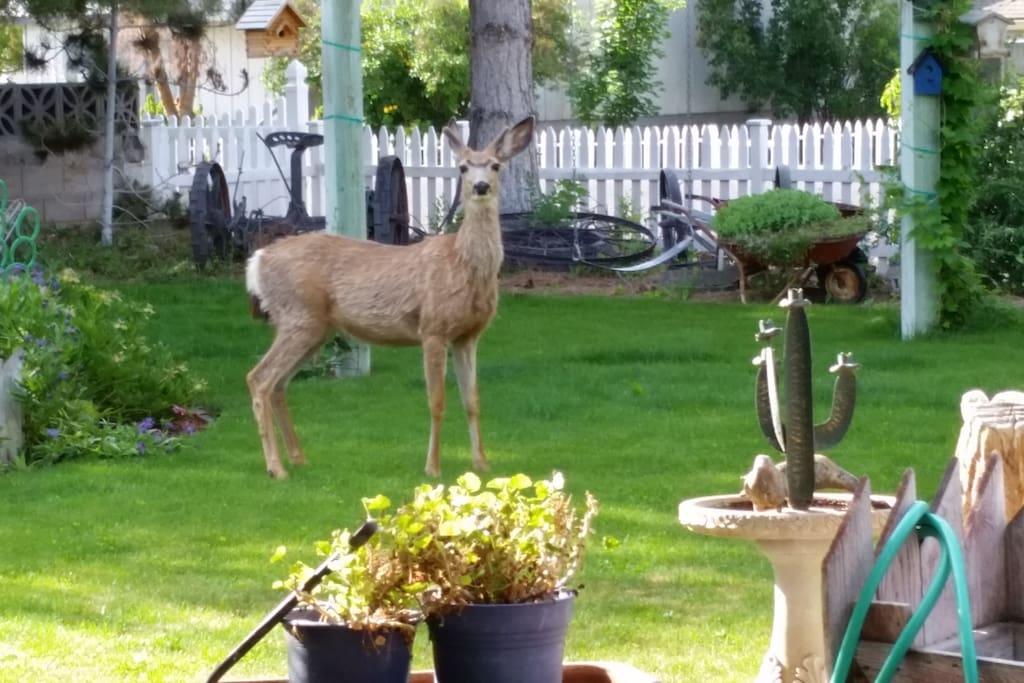 Local wildlife in the backyard