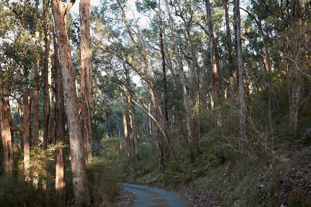 Bushland driveway