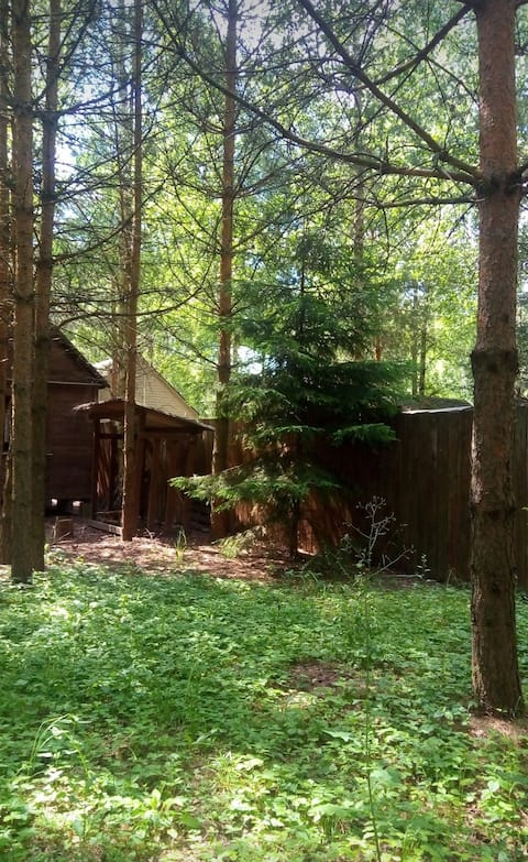 Summer house in the pines