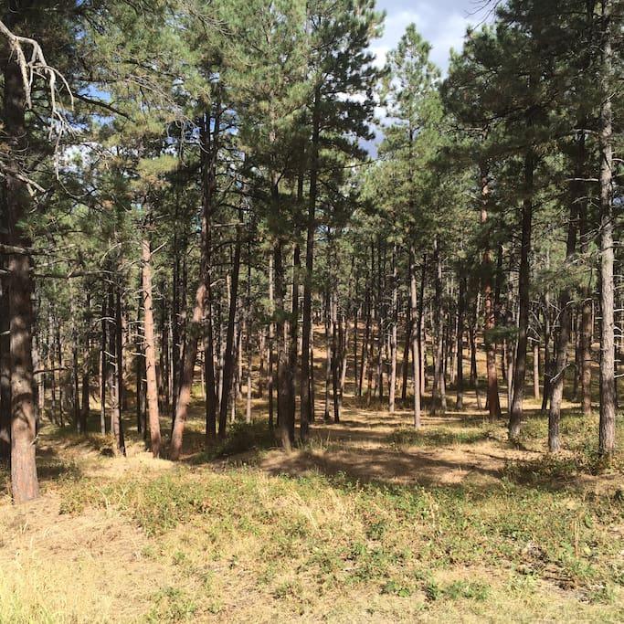 5+ Acres to roam! Deer, Elk, Bear, Owls, Wild Turkey and Black Squirrels!