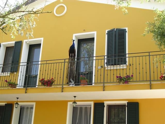 Agriturismo Ai Pavoni - Ariano - Appartement