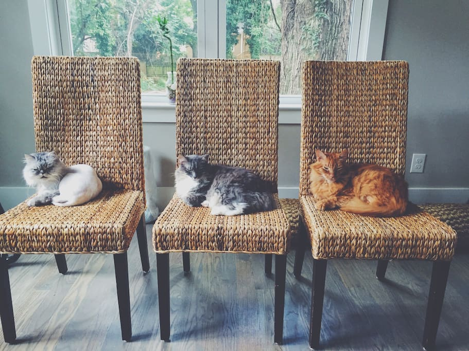 Our 3 babies. They love Airbnb guests!