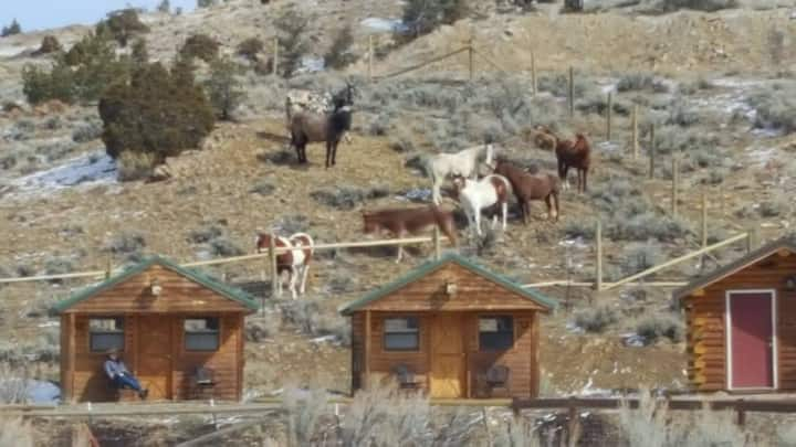 HorseWorks Wyoming's Rustic Ranch Cabin #2
