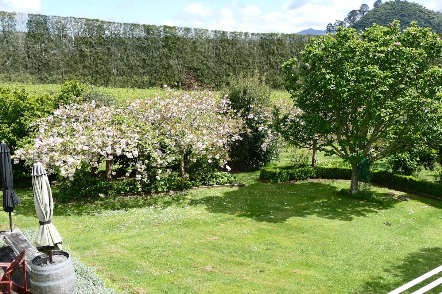 View of garden and kiwifruit orchard.