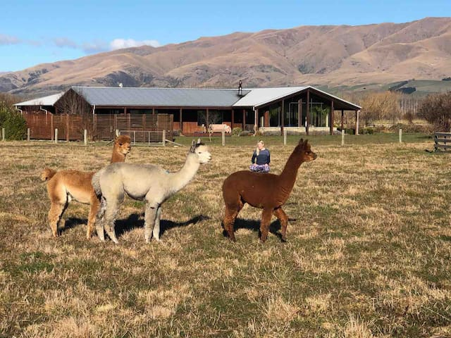 Alpine Alpaca Retreat