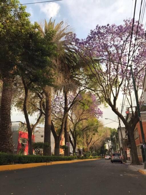 La colonia tiene mucha vegetación y las calles llenas de jacarandas y bugambilias pintan las tardes de lindos contrastes de color