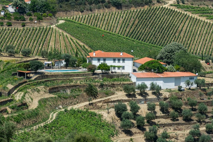 Stunning boutique vineyard with wine experience