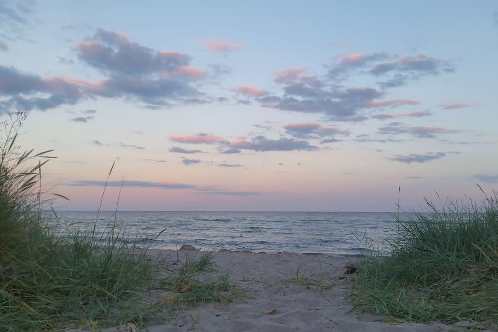 Beach Herte