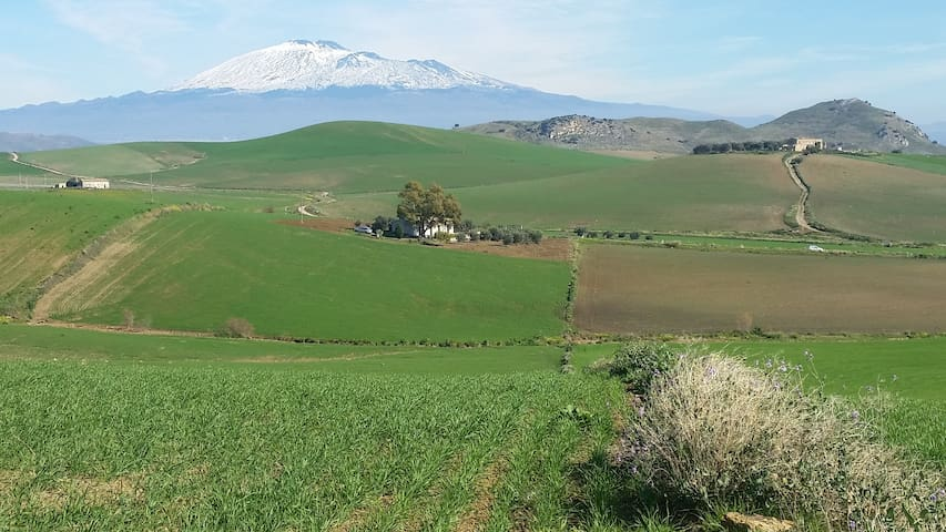 Masseria di charme Terra del Grano - Franchetto - House