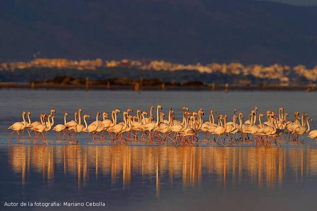 Flamingos en la Bahía