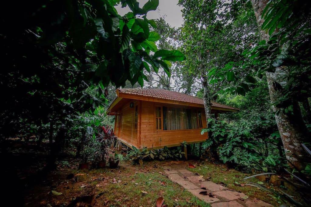 Independent Cottage amidst the plantation