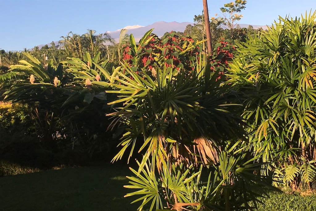 View from front yard of Mauna Kea