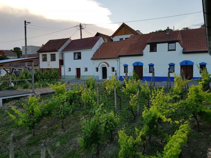 Vinný sklep Kraví Hora Bořetice - varianta 4 osoby