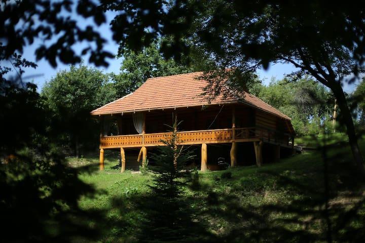 Molfara Cottage in Carpathian mountains