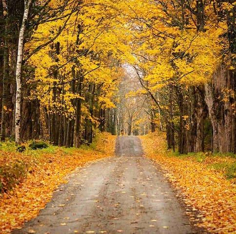 Birch Tree Hideaway