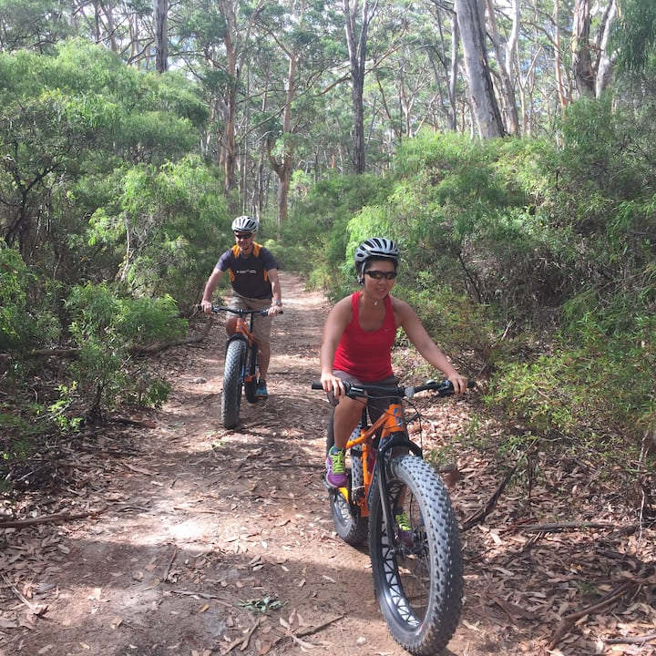 Fat bikes are perfect for forest trails
