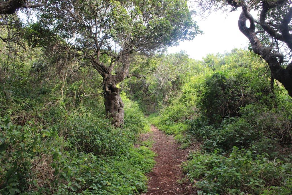 Milkwood Forest