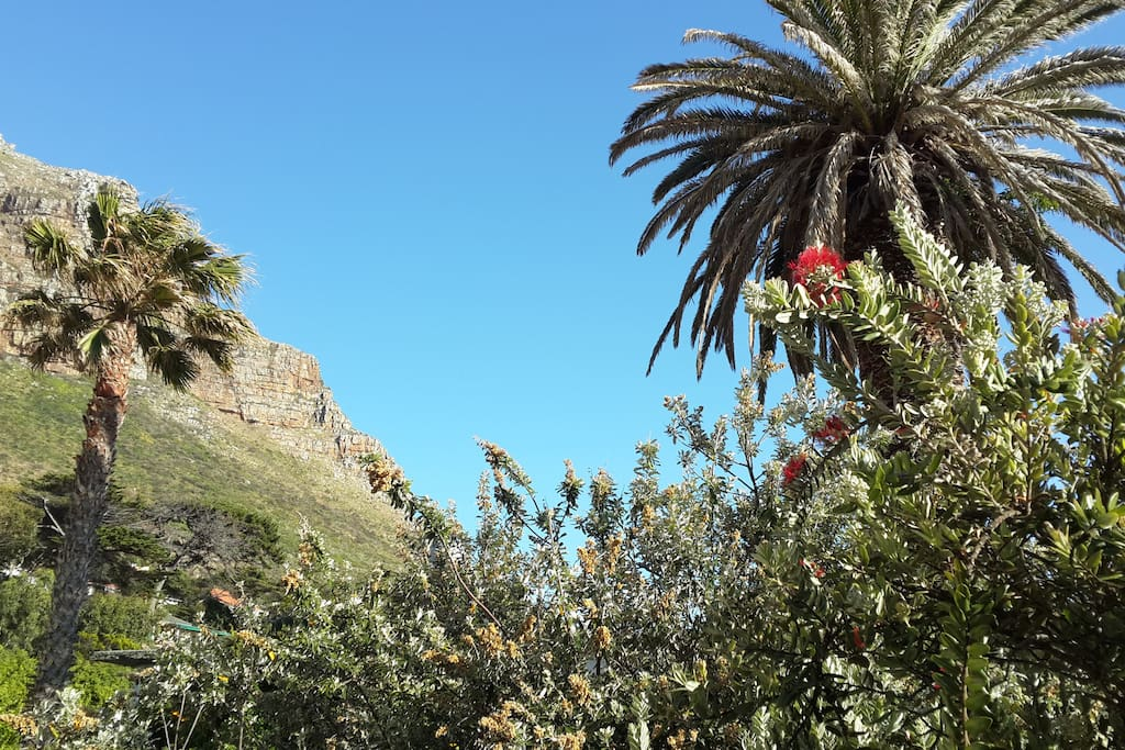 View from the treehouse terrace of the garden and Muizenberg Mountain