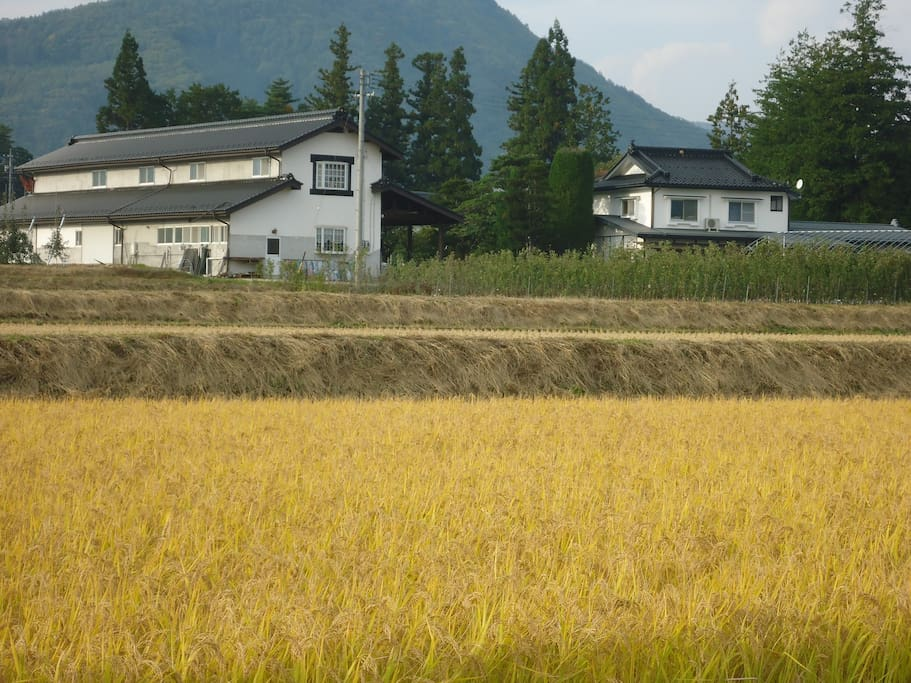 the view of our farm lodge/home and storage home above the rice field